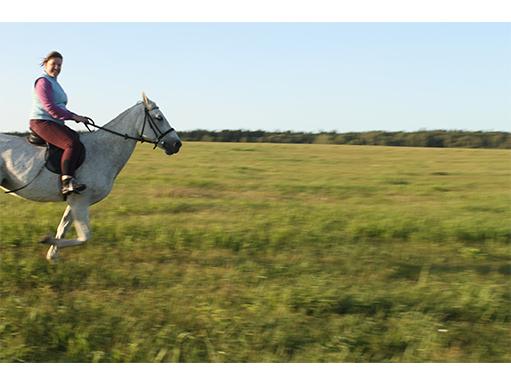 Обучение верховой езде для езды на лошади в полях, лесах
