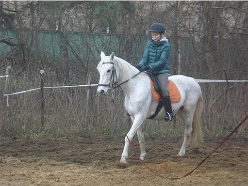 Отработка управления лошади на шагу